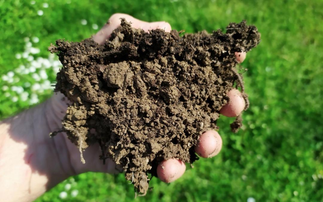 L'AGRICULTURA I LA RAMADERIA REGENERATIVA SÓN CLAU PER AUGMENTAR EL CARBONI AL SÒL: EL NOU INFORME DE RODALE INSTITUTE